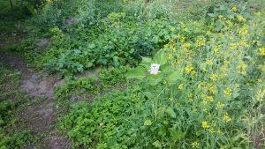 Owly im Magic Garden 2 - im Kräuterbeet